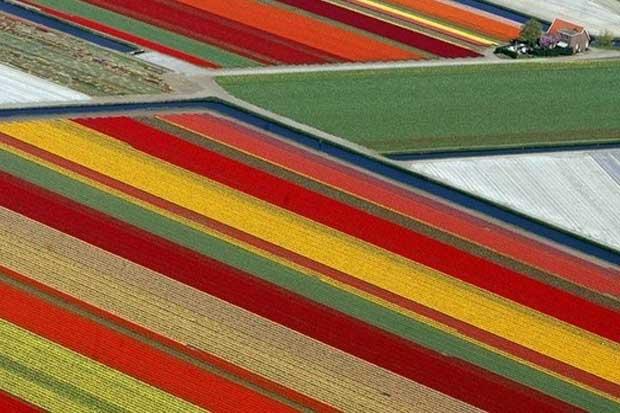 Tulip fields - Lisse, Netherlands