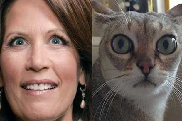 Michelle Bachmann vs. This Cat
