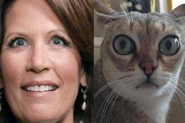Michelle Bachmann vs. This Cat
