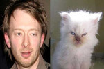 Thom Yorke vs. This Cat