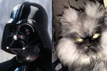 Darth Vader vs. This Cat
