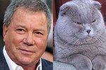 William Shatner vs. This Cat