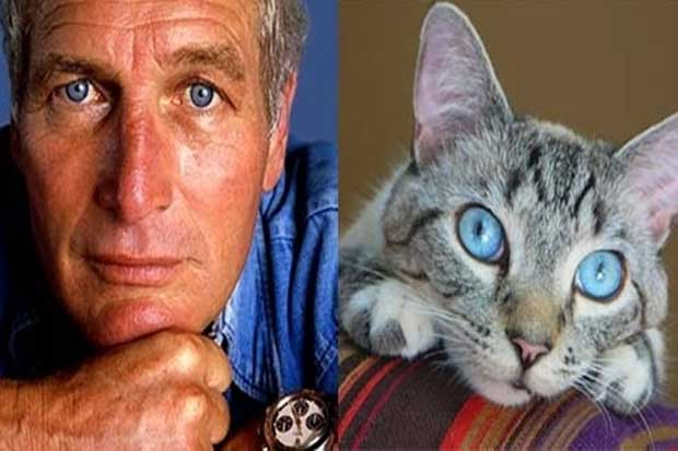 Paul Newman vs. This Cat