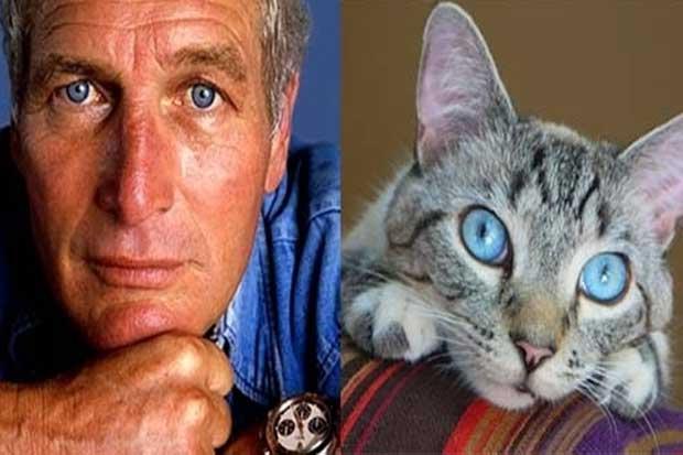Paul Newman vs. This Cat