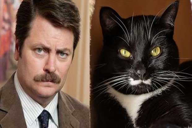 Nick Offerman vs. This Cat