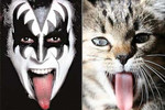 Gene Simmons vs. This Cat