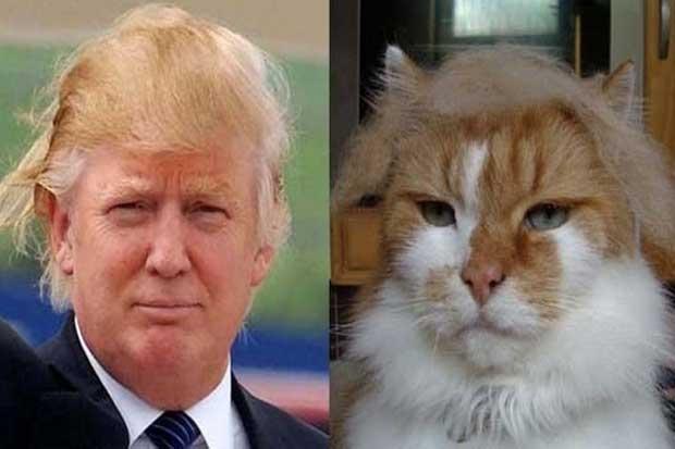 Donald Trump vs. This Cat