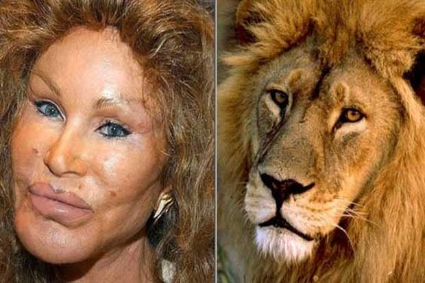 Jocelyn Wildenstein vs. This Cat