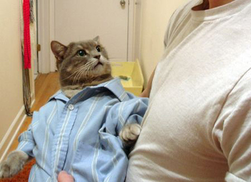 Cats Who Think They Are Getting Dressed For Work