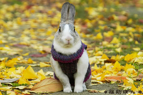 Rabbits Who Think They Are Uptight Schoolteachers