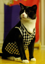 Cats Who Think They Are British Schoolboys From The '50s