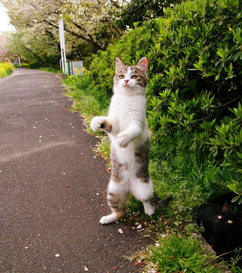 Cats Who Think They Are Going For An Afternoon Stroll