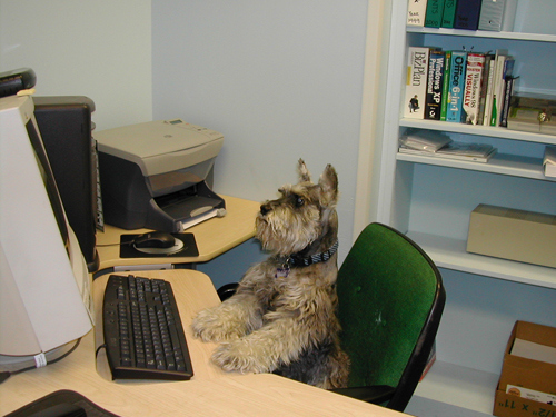 Dogs Who Think They Are Your Secretary