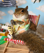 Squirrels Who Think They Are Having A Nice Day At The Beach