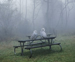 Owls Who Think They Are Picnicking In The Rain