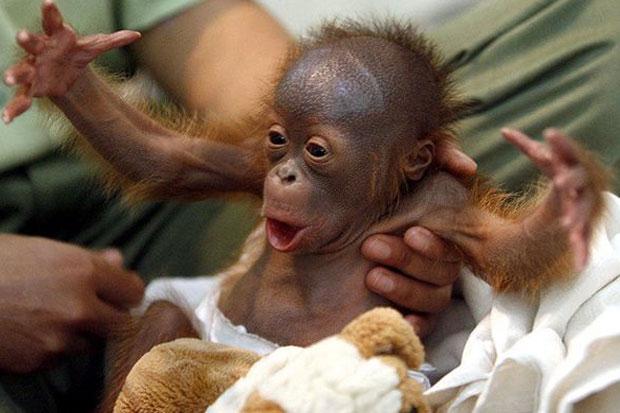 Cute Little Baby Monkeys Cute Little Baby Monkeys Cute