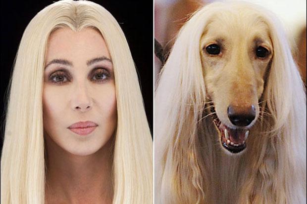 celebrity-animal-look-alike-09-Cher-Blon