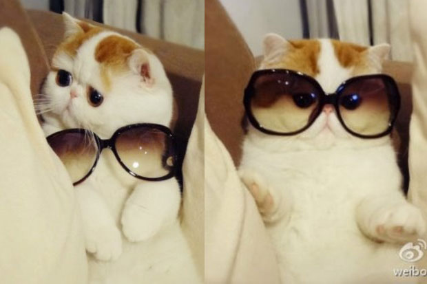 Cute Pics and other adorable things.  - Page 6 Snoopy-cat-fashionable-02