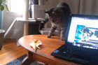 Cat is Afraid of Banana Peel
