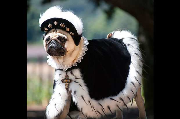 Pug Dress Pug Family in Fancy Dress