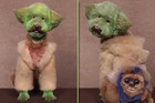 OMG Over-Groomed Dogs