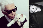 OMG Karl Lagerfeld Wants To Marry His Cat