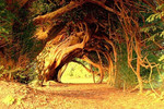 Yew Tree Tunnel, Carmarthenshire