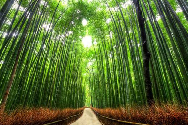 Bamboo Path, Kyoto