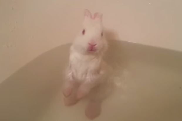 Cuteness Alert! Baby Bunny Has Bath For First Time