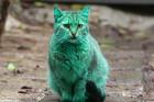 Meet The Green Street Cat from Bulgaria