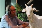 Si & Gary: Gary's Christmas Goat Condolence Card