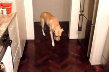 These Funny Guilty Dogs Won't Admit To Their Bad Behaviour