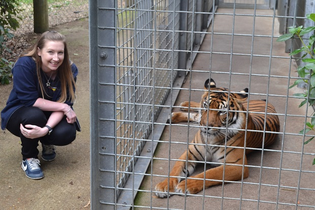 Hamilton Zoo Face2Face Encounter with a Sumatran Tiger