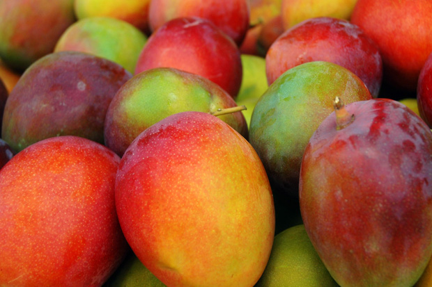 The Most Expensive Mangoes: First-harvest Brisbane Mangoes from Australia. $4,200 each.