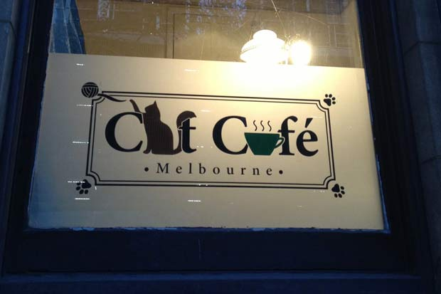This week, an Australian cafe called 'Cat Cafe Melbourne' will be opening its doors for diners and cat fancies alike.
