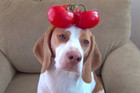 A Dog Balances 100 Fruits & Vegetables on His Head