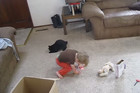 Kid and Cat Team Up To Tackle The Red Dot Laser