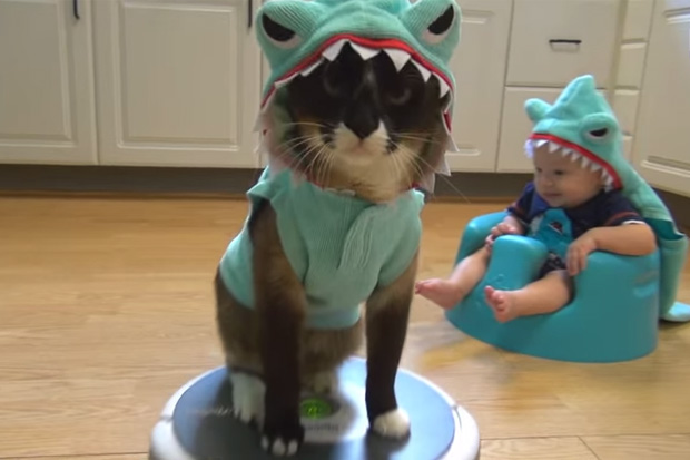 Cat & Baby Dress Up In Matching Costumes For Shark Week