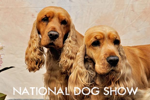 The Eukanuba National Dog Show!