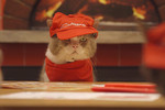 How would you feel if your Hawaiian pizza was made by little feline food workers?