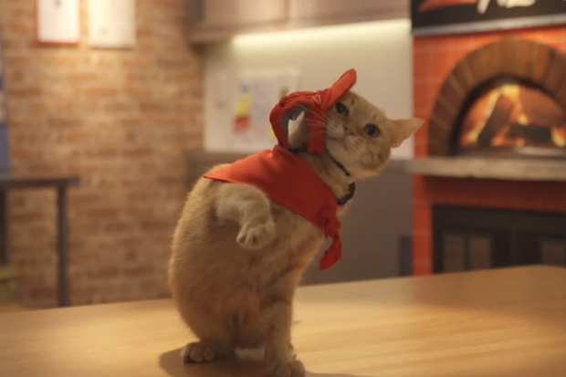 Fortunately (or unfortunately) this isn't the case in real life, but Japan's Pizza Hut chain has created a fictional Pizza Hut branch run entirely by cats.