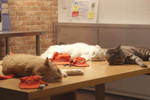 Part of their newest video campaign, Pizza Cat! follows four new employees at Pizza Hut.