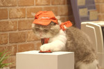 Along with the video series highlight the cats' daily office antics, there's a dedicated website about the cats and their Pizza Hut journey.