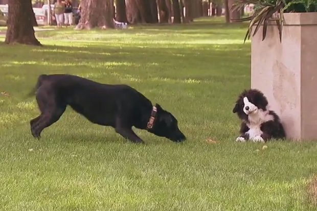 A Stuffed Dog Toy Pranks Real Dogs