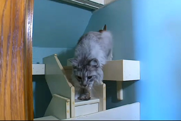 Man Spends 15 Years Building His House For His Cats