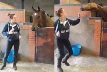 Horse Dances To Meghan Trainor's 'All About That Bass'