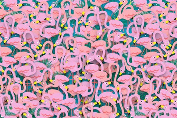 Can you spot the ballerina among the flamingos?