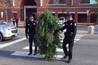 Tree arrested by police after holding up traffic