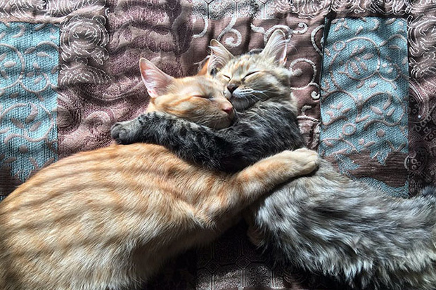 Adorable pictures of kittens in love are reminding everyone about the true meaning of Christmas