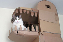 Owner builds giant cardboard dragon for his cat to play in